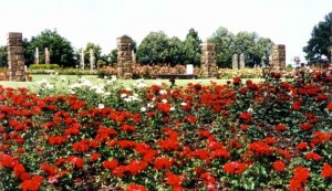 roseraie